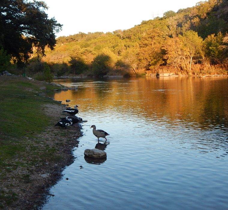 Guadalupe River Fishing Spots - RIo Guadalupe Resort